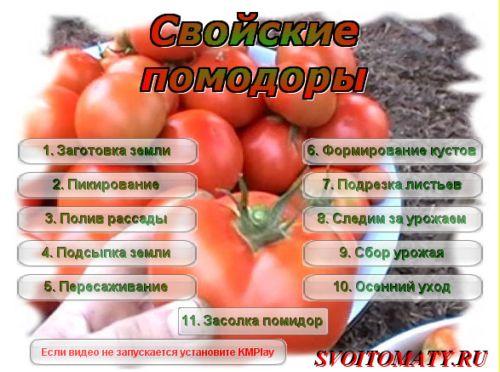 Видеокурс Свойские помидоры