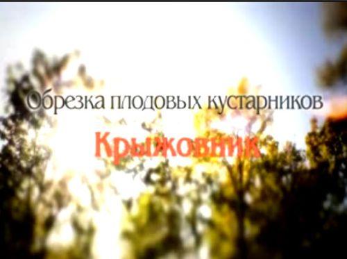 Видеокурс Обрезка крыжовника