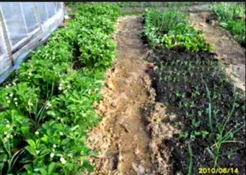 Видеокурс Борьба с сорняками с помощью  опилок