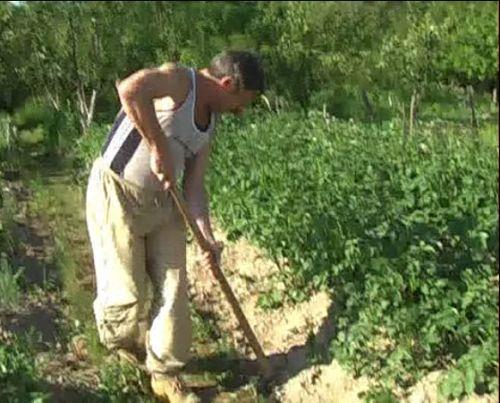 Видеокурс Борьба с сорняками