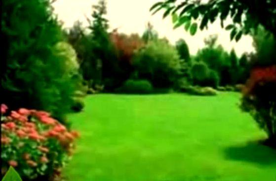 Видеокурс Закладка газона